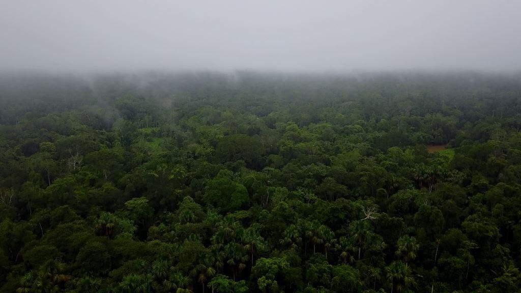 Yasuni Wildlife in Ecuador